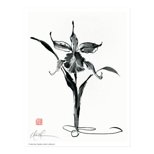 L2410 Studies in Ink: Cattleya II Print © Nan Rae