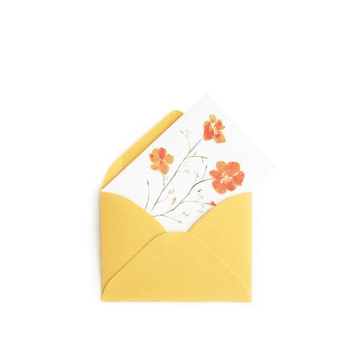 Poppy Gift Enclosure © Nan Rae