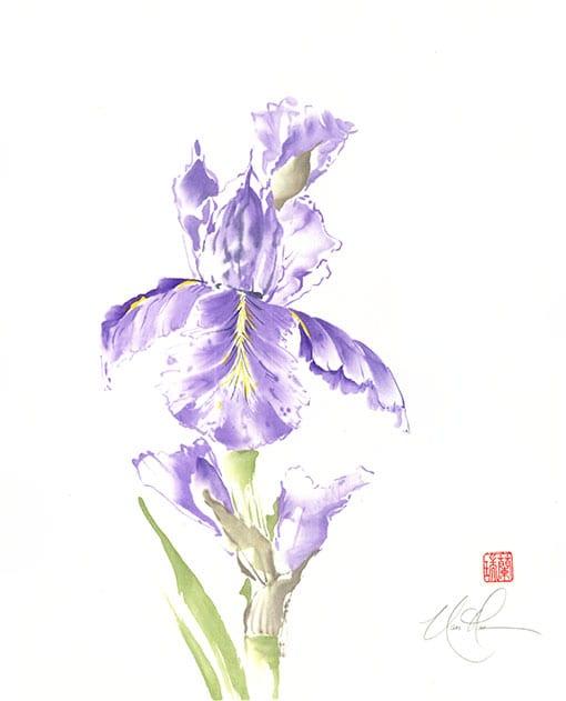 Bearded Iris painting by Nan Rae